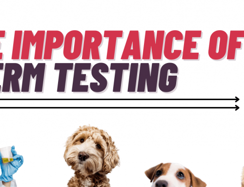 The Importance of A Dog Sperm Test