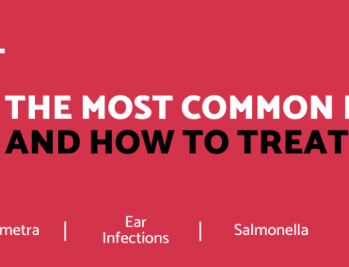 The Most Common Dog Diseases And How To Treat Them